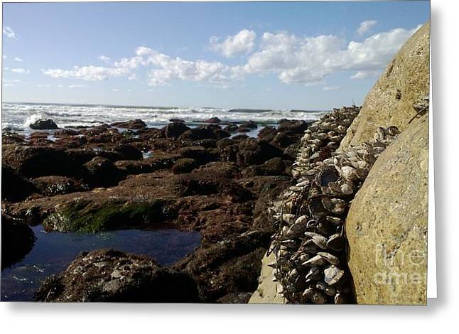 Low Tide Cabrillo National Monument Greeting Card