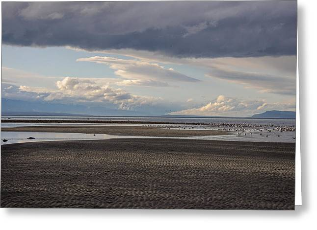 Low Tide  Greeting Card by Roxy Hurtubise
