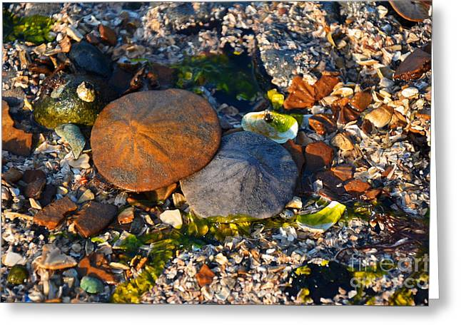Low Tide Lovers Greeting Card