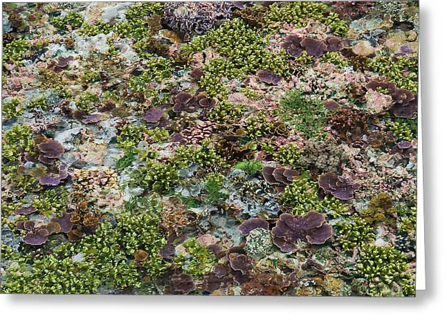 Low Tide, Misool Island, Raja Ampat Greeting Card by Jaynes Gallery