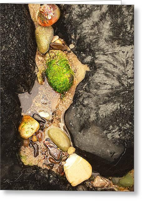 Low Tide Treasure Greeting Card by Ron Regalado
