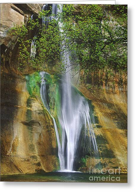 Lower Calf Creek Falls Escalante Grand Staircase National Monument Utah Greeting Card
