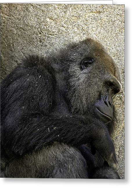 Lowland Gorilla Greeting Card by Gary Neiss