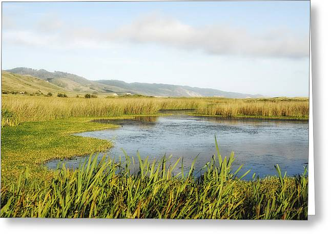 Lowland Marshes Greeting Card by Donna Blackhall