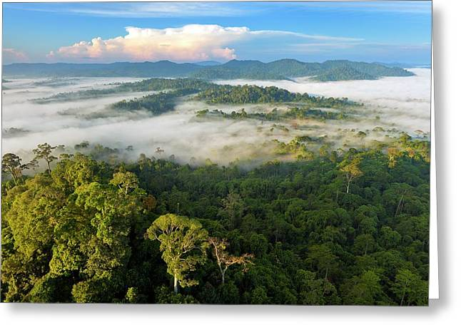 Lowland Rainforest Greeting Card by Alex Hyde
