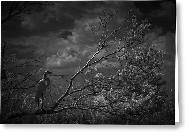 Loxahatchee Heron At Sunset Greeting Card by Bradley R Youngberg