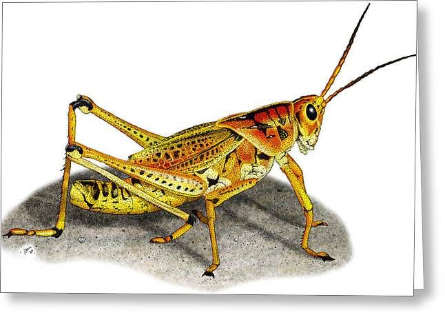 Lubber Grasshopper Greeting Card by Roger Hall