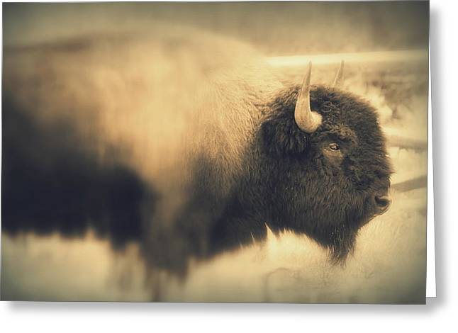 Greeting Card featuring the photograph Lucky Yellowstone Buffalo by Lynn Sprowl