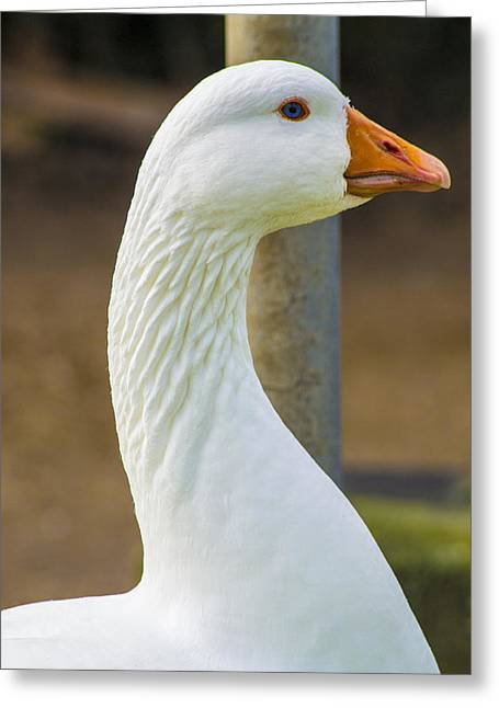 Greeting Card featuring the photograph Lucy Goose by Naomi Burgess