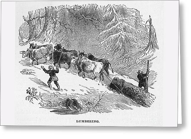 Lumbering - 1878 Greeting Card