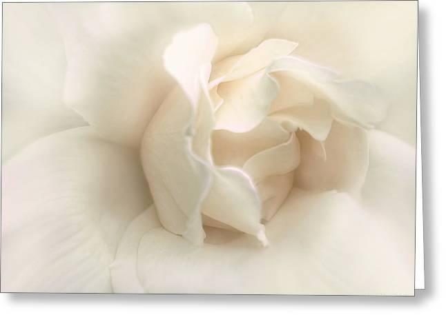 Luminous Ivory Rose Flower Greeting Card