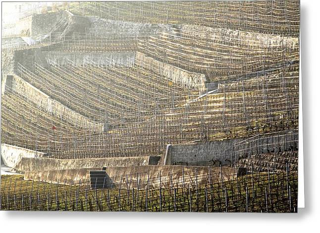 Luminous Lavaux Vineyards  Greeting Card