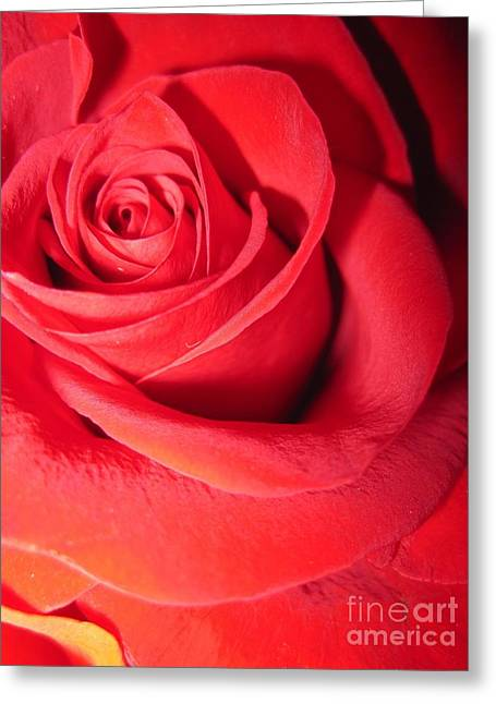 Luminous Red Rose 6 Greeting Card