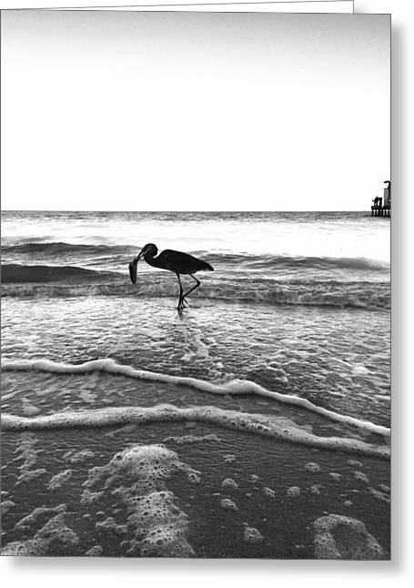 Greeting Card featuring the photograph Lunch At The Pier by Jean Marie Maggi