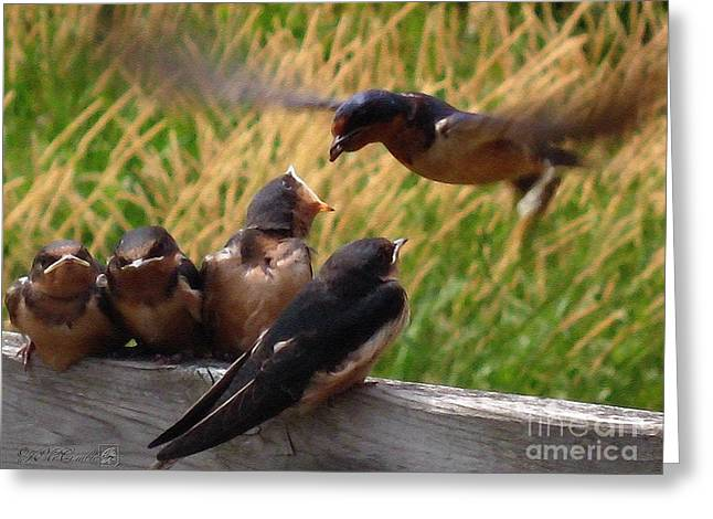 Lunch Is Served To The Fourth Baby Barn Swallow Greeting Card by J McCombie