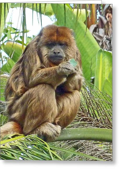 Lunch Time - Santa Ana Zoo Greeting Card