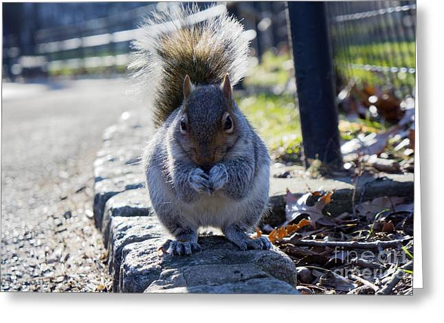 Lunchtime For Central Park Squirrel Greeting Card