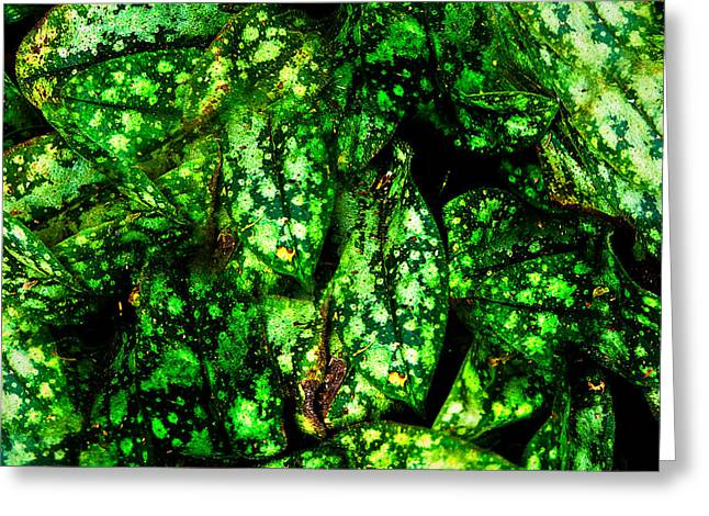 Lungwort Leaves Abstract Greeting Card by  Onyonet  Photo Studios