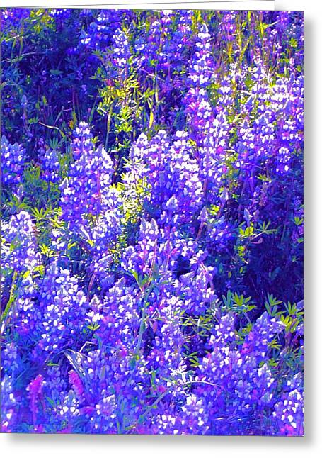 Lupine 2 Greeting Card by Pamela Cooper