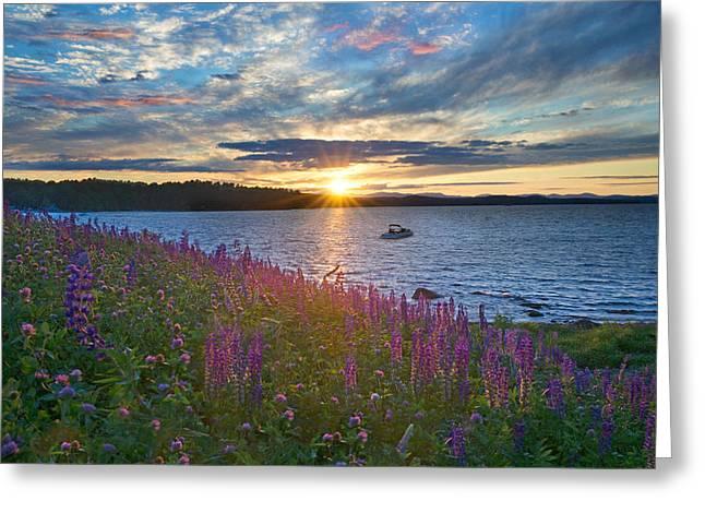 Lupine Sunset On Long Lake Greeting Card