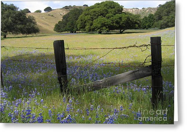Lupines And Oaks Greeting Card