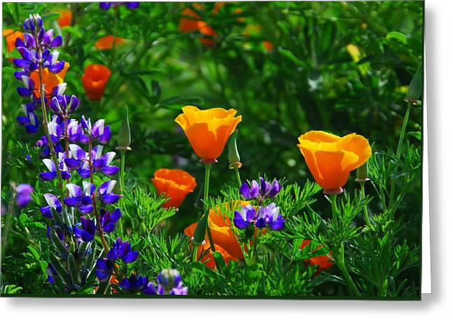 Lupines And Poppies Greeting Card