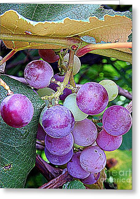 Luscious Grapes In New Orleans Louisiana Greeting Card by Michael Hoard
