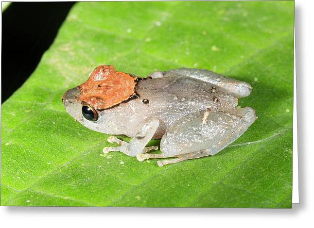 Luscombe's Rain Frog Greeting Card
