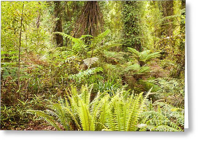 Lush Green Sub-tropical Nz Rainforest Greeting Card by Stephan Pietzko