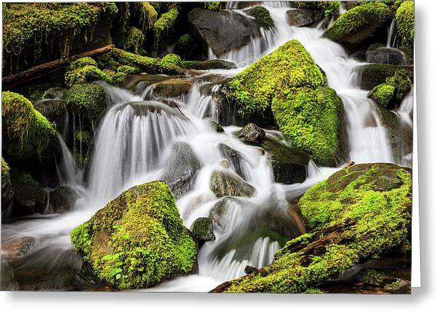 Lush Waterfall Olympic National Park Greeting Card by Tom Norring