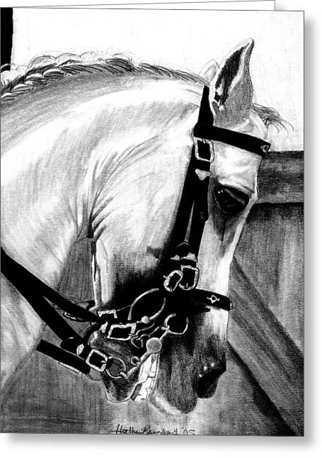 Lusitano Horse Portrait Greeting Card by Olde Time  Mercantile