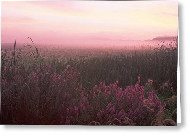 Lustrife Sunrise Great Meadows Concord Ma Greeting Card