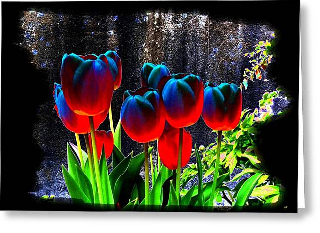 Lustrous Tulips Greeting Card by Will Borden