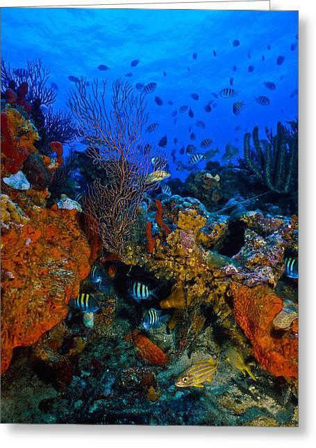 Lynns Reef Greeting Card