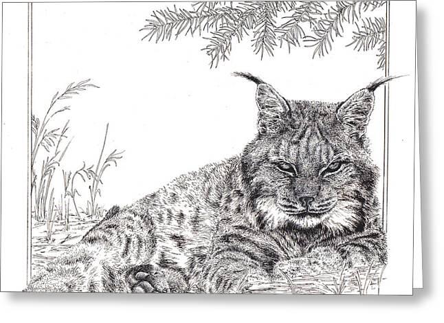 Lynx Greeting Card by Rita Polizzi