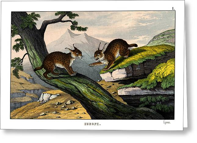 Lynx Greeting Card by Splendid Art Prints