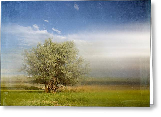 Lyrical Tree - 01bt01aa Greeting Card by Variance Collections