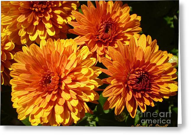 M Bright Orange Flowers Collection No. Bof4 Greeting Card