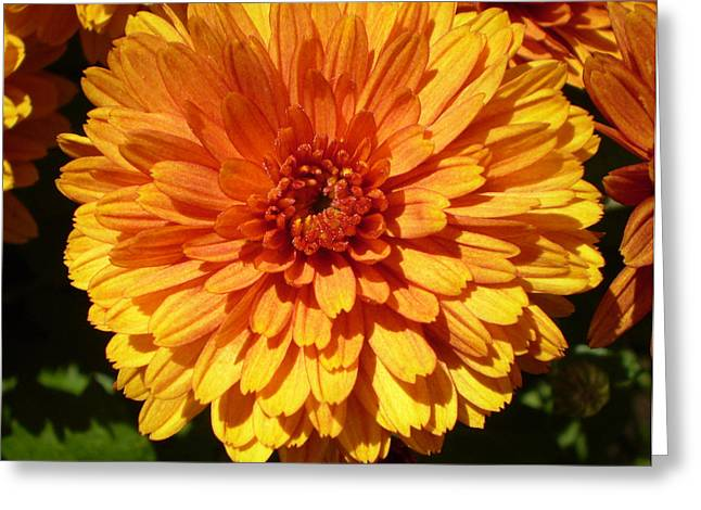 M Bright Orange Flowers Collection No. Bof5 Greeting Card
