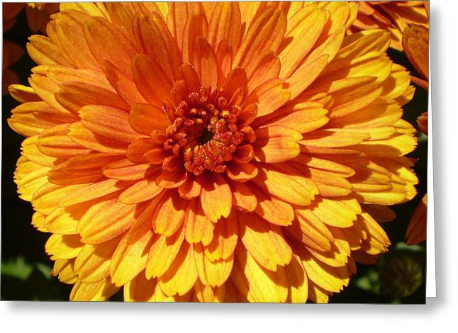 M Bright Orange Flowers Collection No. Bof7 Greeting Card