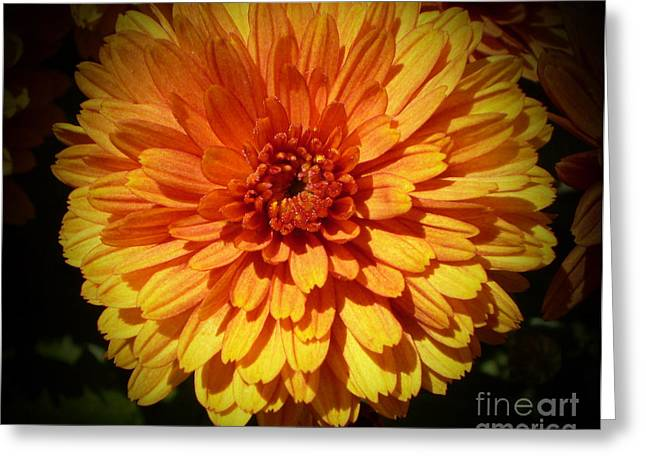 M Bright Orange Flowers Collection No. Bof8 Greeting Card