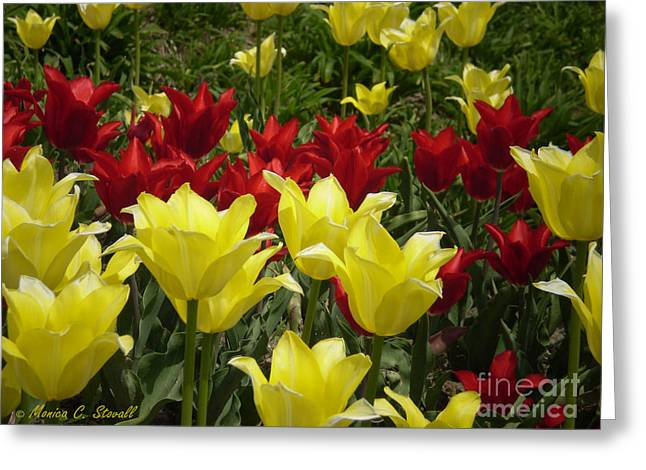 M Color Combination Flowers Collection No. Cc6 Greeting Card