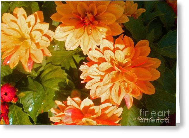 M Shades Orange Flowers Collection No. O3 Greeting Card