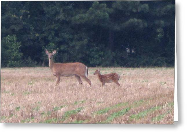 Mable The Female Deer With Harriet The Baby Fawn Greeting Card by Debbie Nester