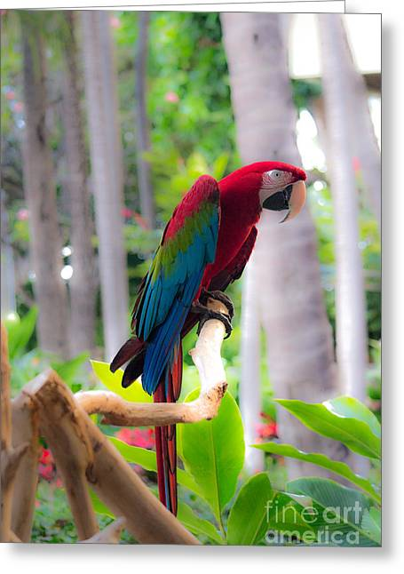 Greeting Card featuring the photograph Macaw by Angela DeFrias
