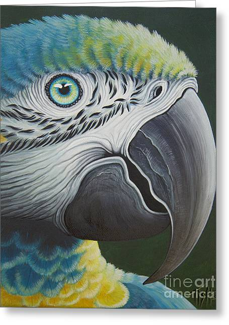 Macaw Head Greeting Card