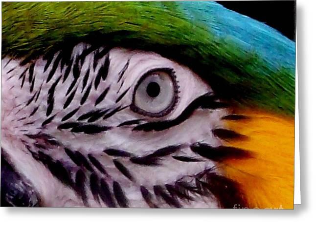 Macaw Parrot Eyes You Greeting Card by Gail Matthews