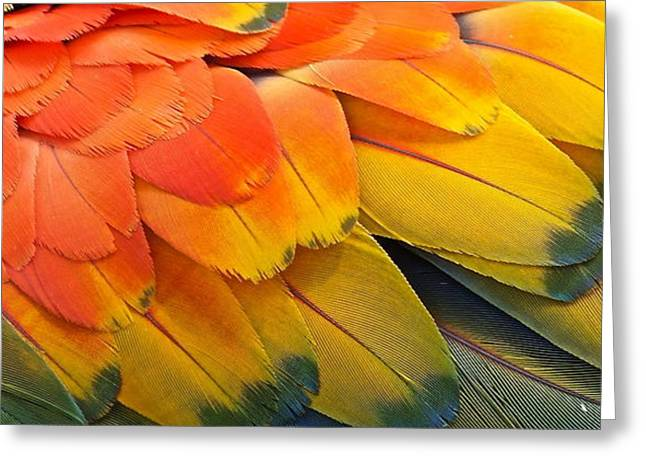 Macaw Yellow Greeting Card by Colleen Renshaw