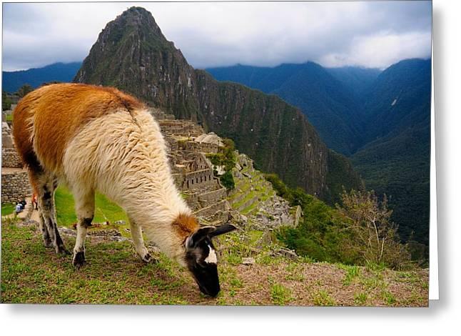 Machu Picchu Peru Greeting Card by Max Ratchkauskas