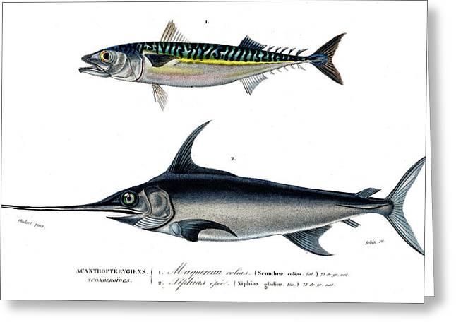 Mackerel And Swordfish Greeting Card